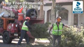 Phoenix Large Tree Removal Companies